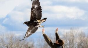 Take A Walk Through The Woods With Hawks During This One Of A Kind Experience In Minnesota