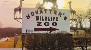 Take An African Safari Without Leaving West Virginia With A Trip To Hovatter's Zoo