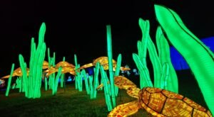 One Of The Largest Lantern Festivals In The Country, Wild Nights At Louisville Zoo Is Absolutely Magical