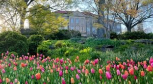These 5 Spots Across Tennessee Are The Perfect Places To See Blooming Flowers This Spring