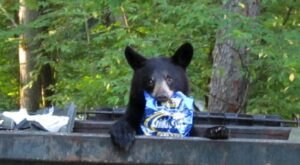 Black Bear Sightings Are On The Rise In Pennsylvania, And Here's What You Can Do To Stay Safe
