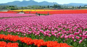 The 7 Most Gorgeous Springtime Destinations In All Of Washington