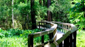 Get Lost In This Beautiful 400-Acre Nature Preserve Farm Near New Orleans