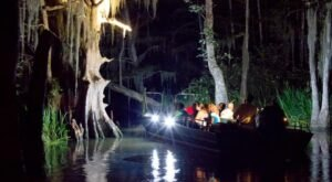 Experience The Swamps Of Louisiana Like Never Before With A Moonlight Swamp Tour