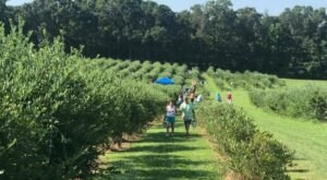 7 U-Pick Blueberry Farms In Mississippi That Are Perfect For A Summer Outing