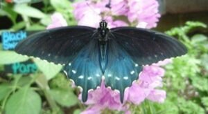 Spend A Magical Afternoon At The Philadelphia Eagles Four Seasons Butterfly House, One Of New Jersey's Largest Butterfly Houses