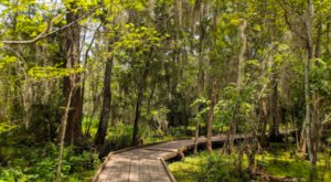 The Bayou Coquille Trail Offers Some Of The Most Breathtaking Views In Louisiana