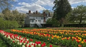 Wander Through A Rainbow Of Tulips At The Spring BloomFest At Stevens-Coolidge House And Gardens In Massachusetts