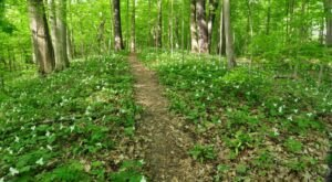 Edna W. Spurgeon Woodland Reserve, An Old-Growth Forest Reserve In Indiana, Will Be In Full Bloom Soon And It's An Extraordinary Sight To See