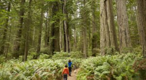 8 Incredible Natural Wonders In Northern California That You Can Witness For Free