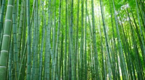 The Bamboo Forest At Oconaluftee Islands Park In North Carolina Is A Must-See Treasure