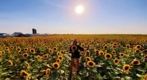 Visiting Iowa's Upcoming Sunflower Festival In Donnellson Is A Great Summer Activity