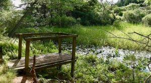 The Josephine Newman Audubon Sanctuary In Maine Offers 2.7 Miles Of Hidden Gem Nature Trails
