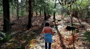 Admission-Free, The Libby Hill Forest In Maine Is The Perfect Day Trip Destination