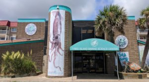 Enjoy A Floating Classroom Immersive Encounter At Tybee Island Marine Science Center In Georgia