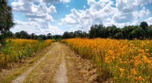 Pepper Ranch, A Nature Preserve In Florida, Will Be In Full Bloom Soon And It's An Extraordinary Sight To See