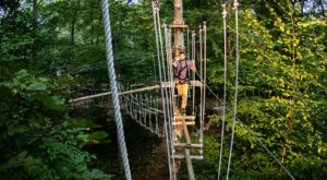 Experience The Virginia Forest From A New Perspective On The Canopy Walk At The Adventure Park At Virginia Aquarium
