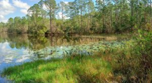 Spot Black Bears & Bald Eagles In Tiger Bay State Forest In Florida