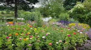 The Butterfly Garden In Maine That's The Perfect Family Destination