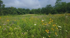 Trillium Trails Wildflower Preserve In Ohio, Will Be In Full Bloom Soon And It's An Extraordinary Sight To See