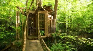 This Cozy Treehouse Is The Most Bookmarked Airbnb In Georgia And It's So Easy To See Why