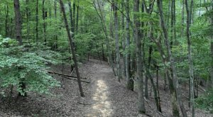 Enjoy Breathtaking Smith Mountain Lake Views When You Hike The Chestnut Ridge Trail In Virginia