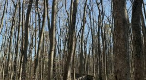 Clear Springs Nature Trail In Mississippi Leads To One Of The Most Scenic Views In The State
