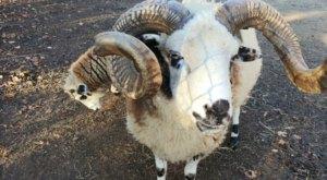 Admission-Free, The Livermon Park Mini Zoo In North Carolina Is The Perfect Day Trip Destination