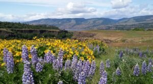 9 Easy And Beautiful Spring Hikes Everyone In Oregon Will Love
