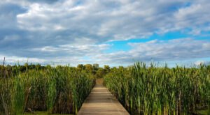 Take An Easy Loop Trail To Enter Another World At Watershed Pond In Illinois