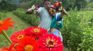 You Can Pick Your Own Flowers At Flying Cloud Farm In North Carolina