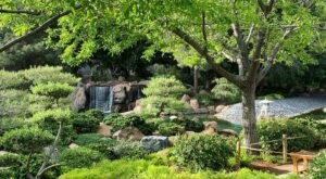 A Lush Oasis In The Arizona Desert, The Japanese Friendship Garden Of Phoenix Is A Peaceful Escape