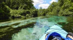 Kayak Along The Weeki Wachee River Through This Incredibly Scenic Area Of Florida