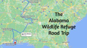 This Alabama Road Trip Lets You Experience 5 Of The State's Most Scenic Wildlife Refuges