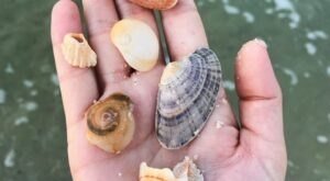 This Hidden Beach Along The Alabama Gulf Coast Is The Best Place To Find Seashells