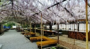 Sip Local Brews Under A Canopy Of Wisteria At 3rd Turn Oldham Gardens In Kentucky