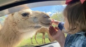 Feed Camels And Ride A Mini Train At This Little Known Safari Park In Kentucky