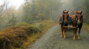 Take A Carriage Ride Through Acadia National Park For A Truly Unique Maine Experience
