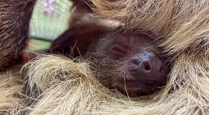 Play With Sloths And Lemurs At Branson's Promised Land Zoo In Missouri For An Adorable Adventure