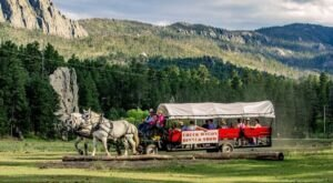 Take A Wagon Ride Through The Black Hills For A Truly Unique South Dakota Experience