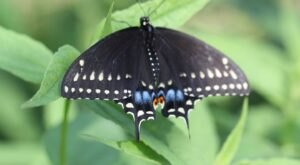 Ladew Topiary Gardens In Maryland Is Home To A Beautiful Butterfly House