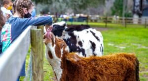 At Over 200-Acres, Spend An Afternoon Visiting With Goats, Pigs, & Cows At Critter Creek Farm Sanctuary In Florida