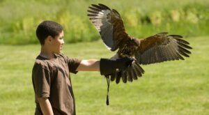 Allow Birds Of Prey To Land On Your Hand At The Falconry Experience In Pennsylvania
