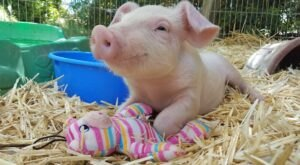 Cuddle The Most Adorable Rescued Farm Animals At Aimee's Farm Animal Sanctuary In Arizona