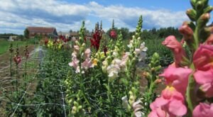 Pick Your Own Fresh Flowers At This Charming Farm Hiding In Maine