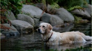 The Toxic Blue-Green Algae Responsible For Killing Dogs Around The U.S. Has Been Found In New York