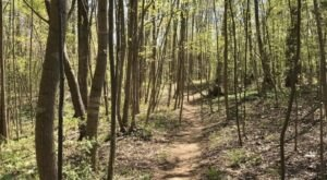 An Easy But Gorgeous Hike, Eno River Loop Leads To A Little-Known River In North Carolina
