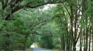 Hop In Your Car And Take The Historic Effingham-Ebenezer Scenic Byway For An Incredible 60-Mile Scenic Drive In Georgia