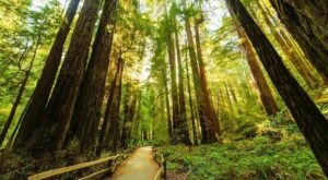 The Oldest State Park In California, Big Basin Redwoods, Should Be On Every Northern Californian's Bucket List