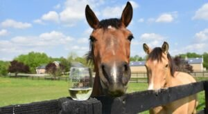 You Can Drink Wine With Farm Animals At Broken Spoke Winery In Maryland